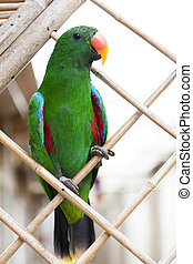 A large parrot is a green macaw. - A large parrot is a green...