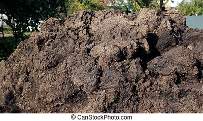 A large pile of manure for fertilizing land in the country, farm, agriculture, dung