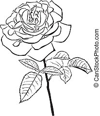 A large rose - The contour image of a large rose with a lush...