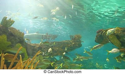 A Large schools of fish drift in a sun-drenched coral reef