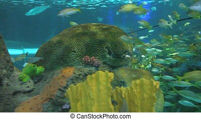 Large schools of fish swim in a coral reef