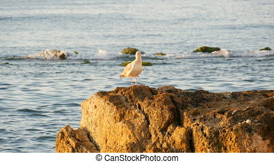 A large sea gull stands on a stone by the sea