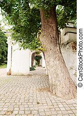 tree near the ruins