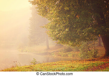 A large tree with autumn leaves on the shore of a lake covered with thick fog.