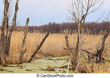 A late autumn view of a swamp. Old tree