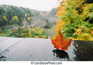 A leaf against mountainscape