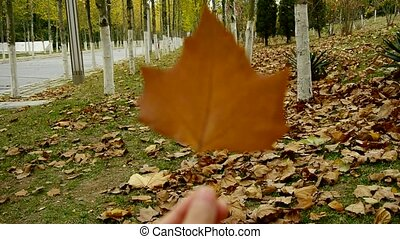 a leaf in hand,shaking in the wind