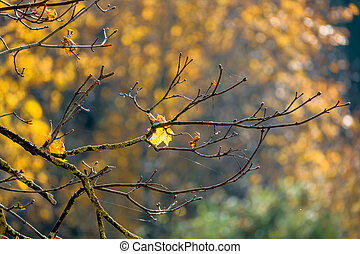 a leaf in the autumn - a leaf in autumn on a tree