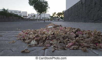A low angle panning shot of a leaf litter heap, swayed by a light wind