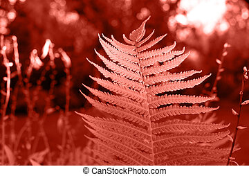 A leaf of fern in the sunlight