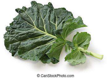 kale - a leaf of kale