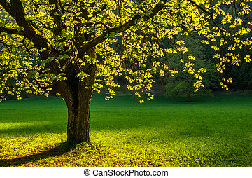 A leafy tree in sunlight in the spring.