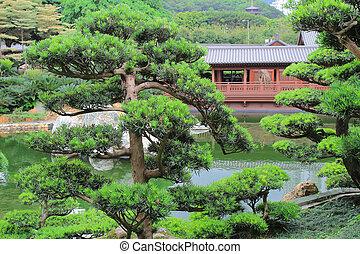 Leaning bonsai tree, Chi Lin Nunnery, Hong Kong