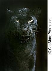 a, leopardo amur, em, seu, natural, habitat