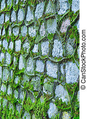 old wall covered with green moss