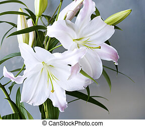 A Lily - Close-up of two flowers blooming lilies in a vase