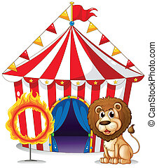 A lion and a ring of fire at the carnival