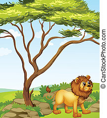 A lion at the right side of a big tree