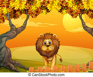 A lion near the wooden fence