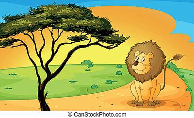 a lion sitting on raod
