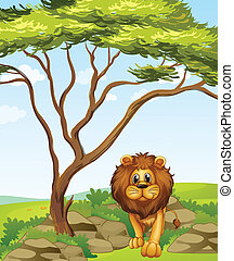 A lion under a tall tree