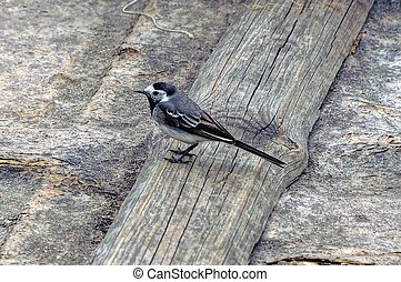 A little bird on a gray board in the ground