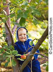 A little boy is sitting on an apple tree.