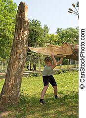 boy tries to lift a tree