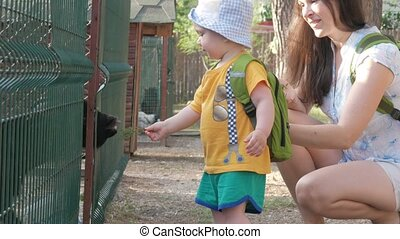 A little boy with his parents is feeding a goat with green grass in the zoo. The kid really likes this animal