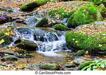 A little Flow in the Wood - Little Flow in the Wood