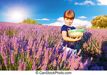 A little girl collects lavender in Provence