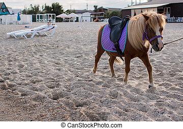 little horse on the sandy shore