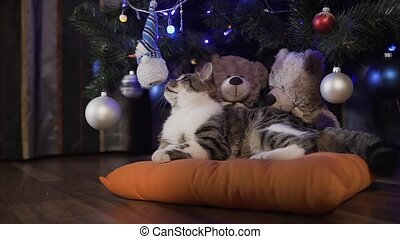 A little lovely cat is lying on an orange pillow under a Christmas tree decorated with decorative balls. Christmas holidays, evening