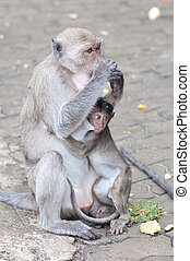 a little monkey with it's mom