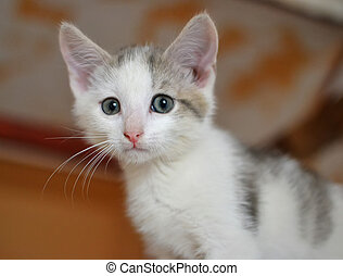 A little scared white kitten