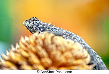 A lizard in the nature