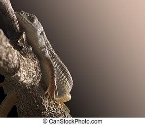 lizard sleeping peacefully on a branch