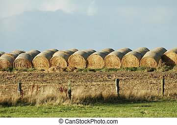 A load aof hay - hay stacks lined up