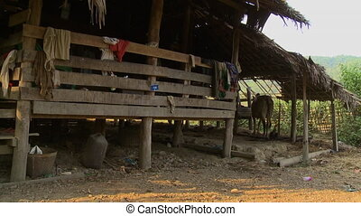 A local tilt house with a cowshed, Bagan, Myanmar - Medium...