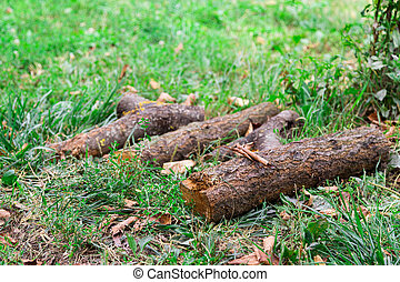 a log in the grass