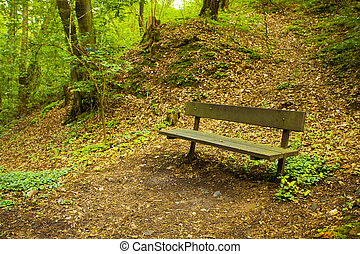 a lone bench in the green wood