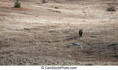 A lone horse grazing in a field