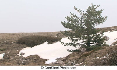 A lone pine tree in the mountains