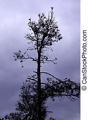 A lone pine-tree silhouette against the purple sky background.