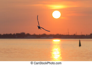 seagull in flight at sunset