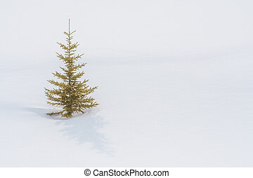 A Lone Tree in the Snow