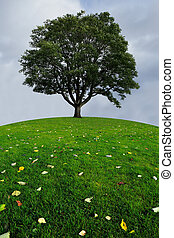 A lone tree on a top of a green hil