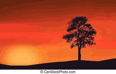 A lone tree on beautiful sunset
