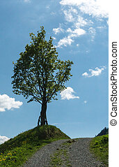 lone tree on the side of a gravel country lane with blue sky and mountain landscape behind