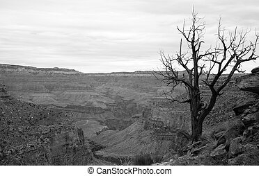 A lone tree stands in the gradn canyon.